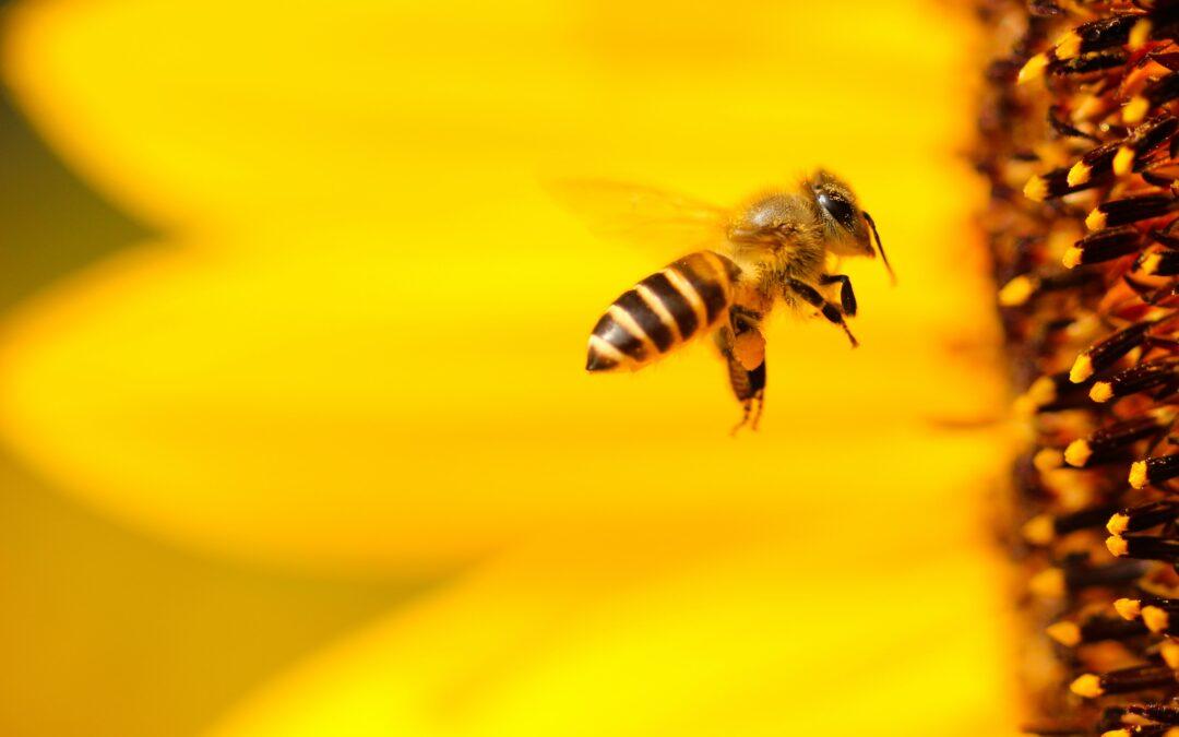Bienenprodukte das Beste von der Biene: Propolis & Geleé Royal