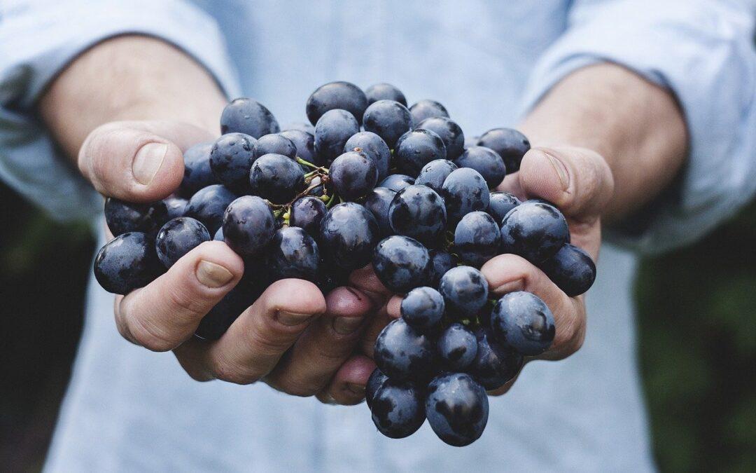 Früchte und Gemüsse: Wie lagerst Du diese richtig?
